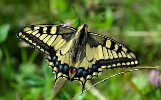 К чему снятся бабочки: трактуем значение сна