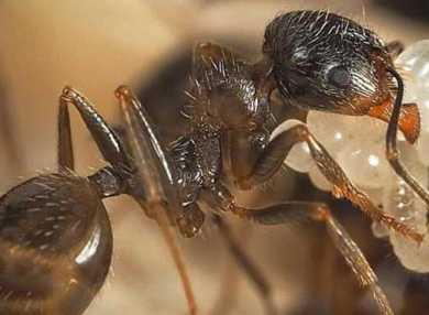 К чему снятся муравьи: сонник