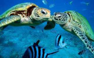 К чему снится черепаха: сонник