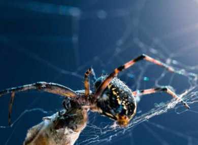 К чему снятся пауки: сонник
