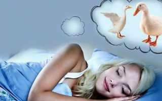 К чему снятся гуси: трактуем значение сна