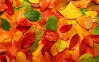 Гадание Берендеев на листьях: виды, трактовка