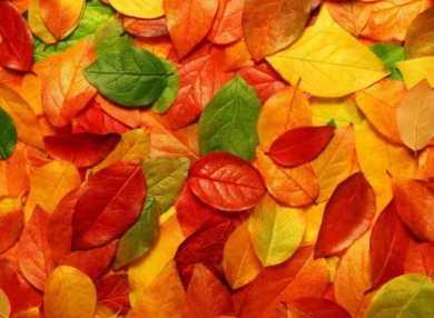 Гадание на листьях по традиции Берендеев