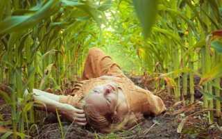 К чему снится кукуруза: сонник