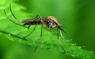 К чему снятся комары: сонник