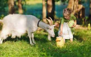 Козье молоко: польза и вред для здоровья