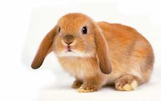 К чему снится заяц: сонник