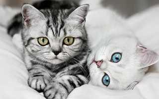 К чему снятся кошки: трактуем значение сна