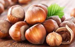 Орехи фундук: польза и вред для здоровья