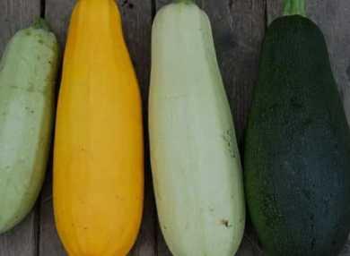 Калорийность кабачков: в сыром виде, жареных, тушеных