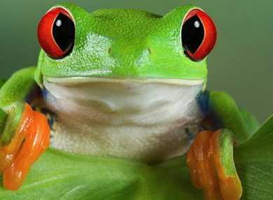 К чему снятся лягушки: сонник