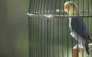 К чему снится попугай: сонник