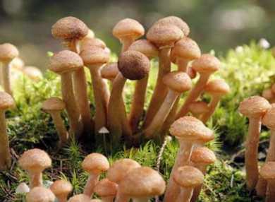 К чему снятся грибы: трактуем значение сна