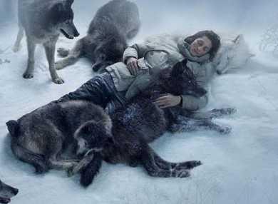 К чему снятся волки: сонник