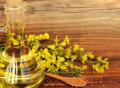 Рапсовое масло: свойства, вред и польза