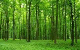 К чему снится лес: сонник