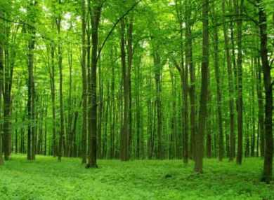 Если Вам приснился лес