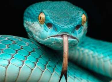 К чему снится змей: сонник