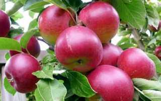 К чему снятся яблоки: трактуем значение сна