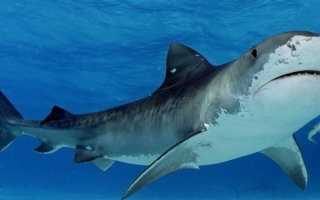 К чему снится акула: сонник