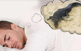 К чему снится крокодил: сонник