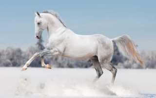 К чему снится конь: трактуем значение сна