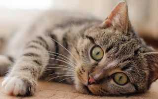 К чему снятся кошки, коты и котята: трактуем значение сна
