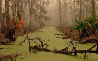 К чему снится болото: сонник