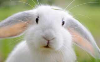 К чему снятся кролики: сонник