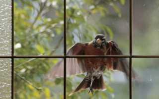 Птица ударилась в окно и улетела — примета