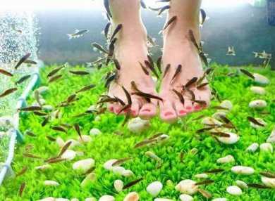 Особенности процедуры пилинга рыбками с фото и отзывами