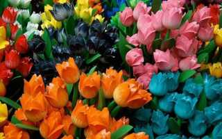 К чему снятся цветы: сонник