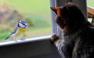 Птица залетела в дом – примета