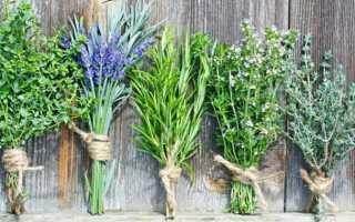 Травы для похудения: сборы и отзывы