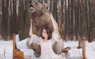 К чему снится медведь: сонник