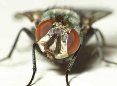 К чему снятся мухи: трактуем значение сна