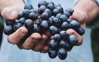 К чему снится виноград: сонник