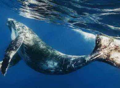 Приснился кит: что это означает