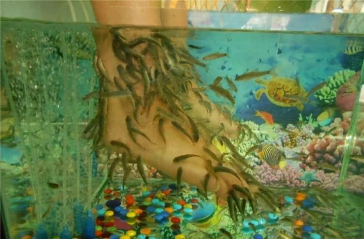 Пилинг рыбками гарра руфа имеет и некоторые противопоказания.