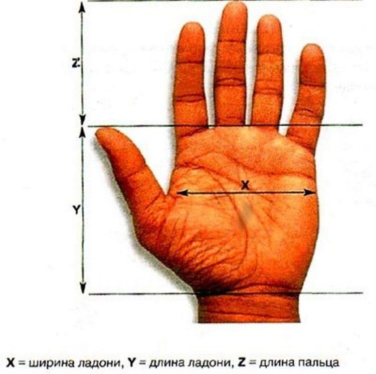 Большое значение имеет и длина пальцев.