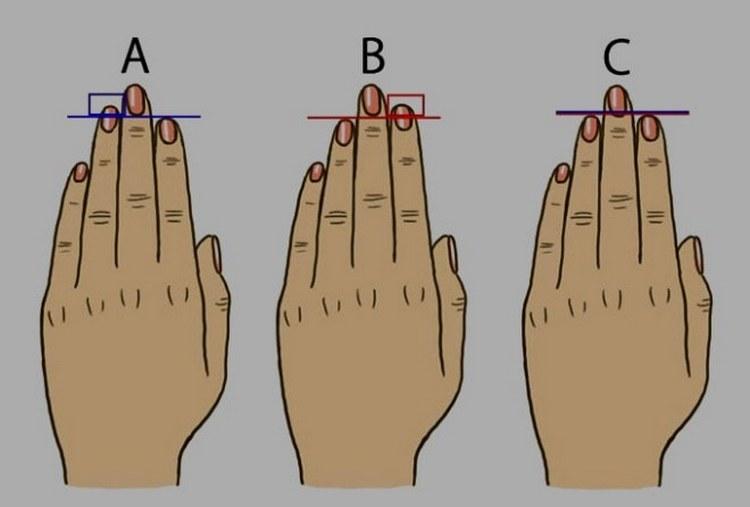 Хиромант всегда учитывает соотношение длины указательного и безымянного пальцев.