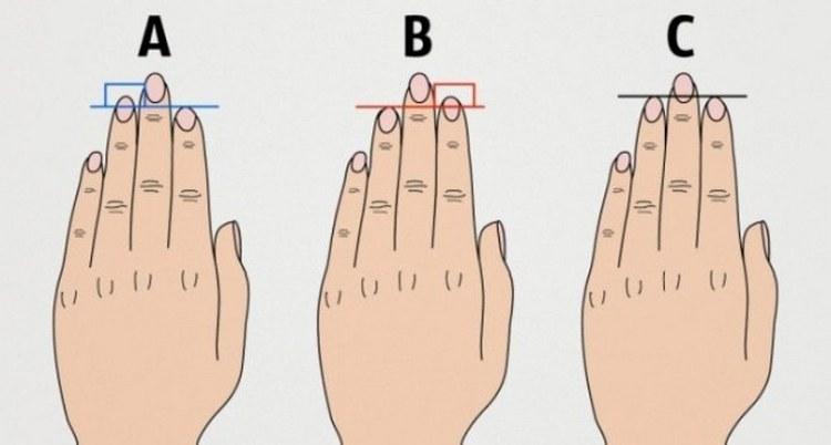 Важна также длина безымянного и указательного пальцев.