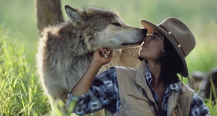 к чему снятся волки женщине