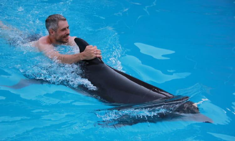 сонник дельфины гладить и плавать