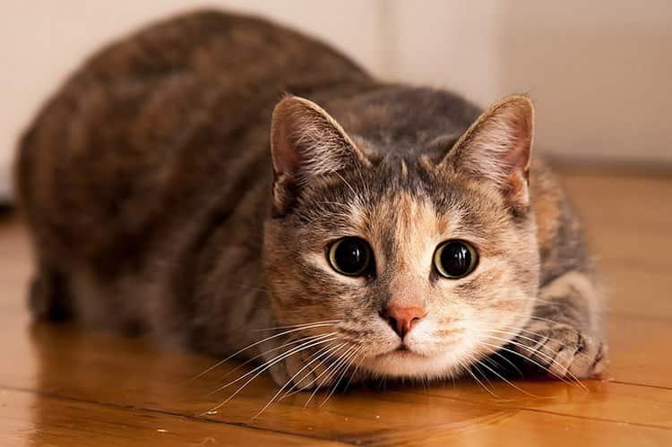 К чему снятся кошки, толкование