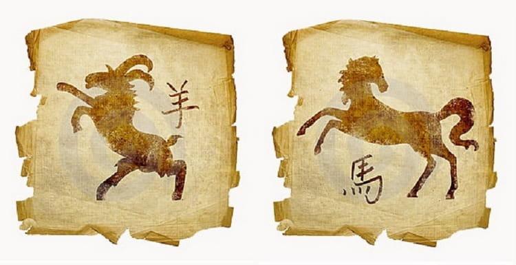 Совместимость: Лошадь и Коза