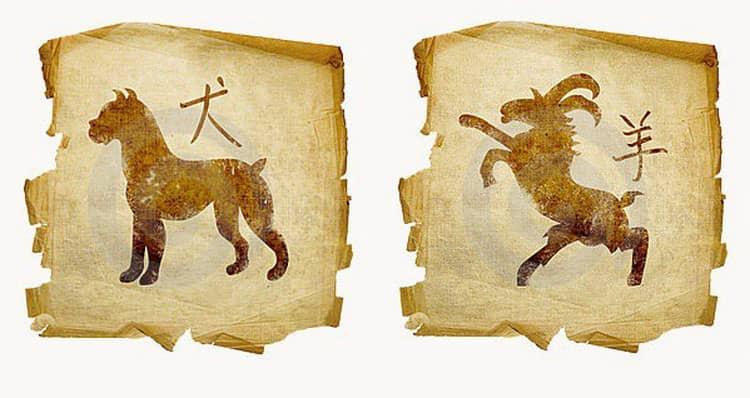 Совместимость: Собака и Коза