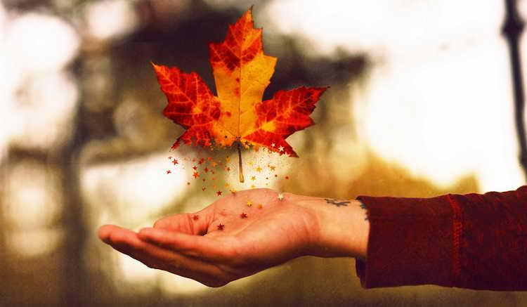 берендеево гадание на листьях деревьев