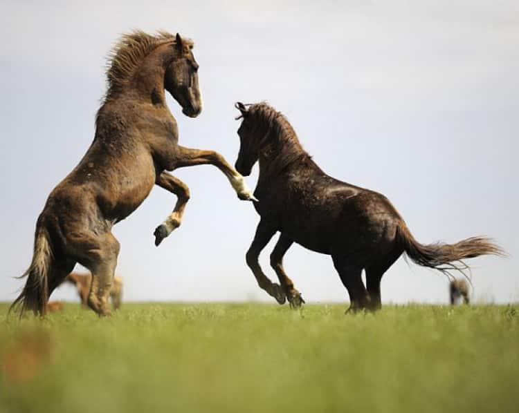 К чему снится лошадь: сонник