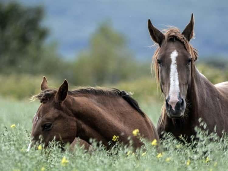 К чему снится лошадь: трактуем значение сна